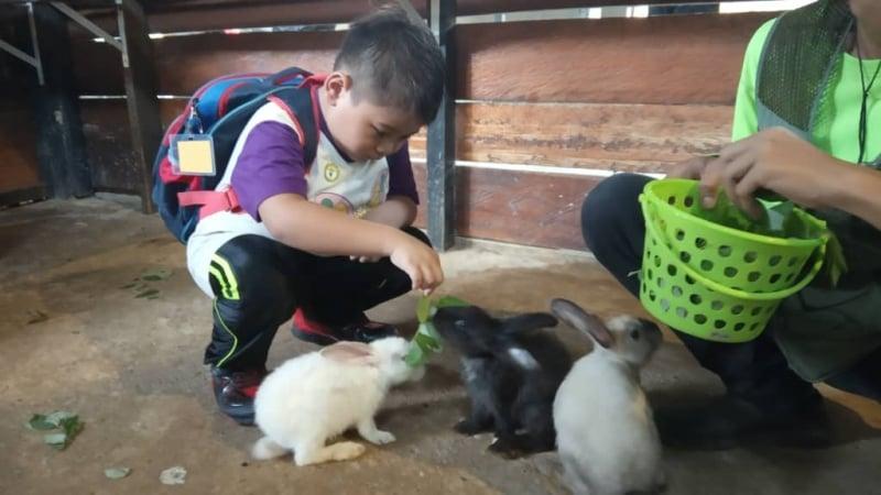a child feeding rabbits at borneo happy farm