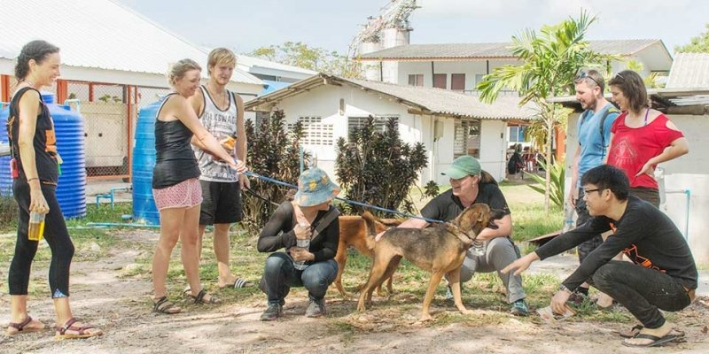 soi dog foundation in phuket
