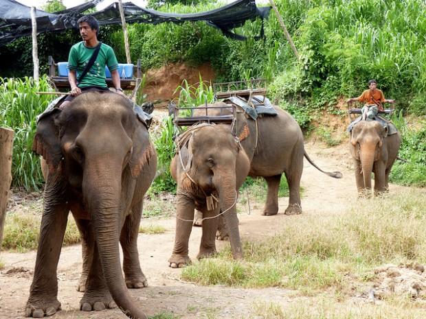 Chơi gì ở Thái Lan: Đi trekking trên lưng voi