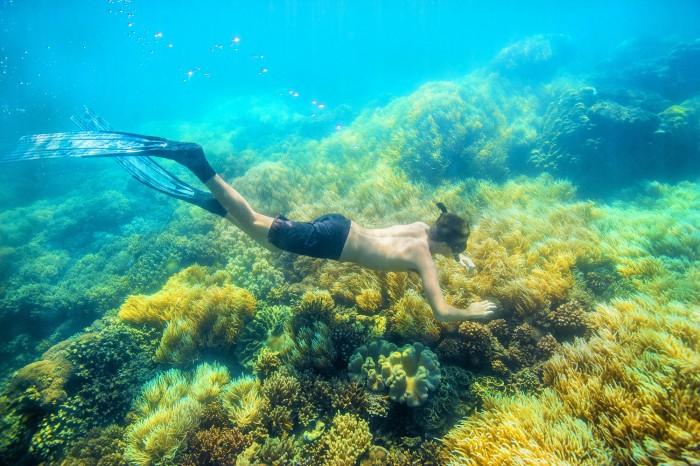snorkelling gbr