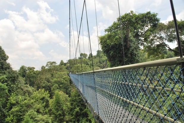 singapore bridges macritchie