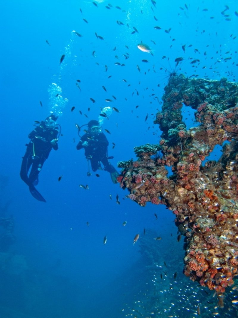 discovering marine life on a dive