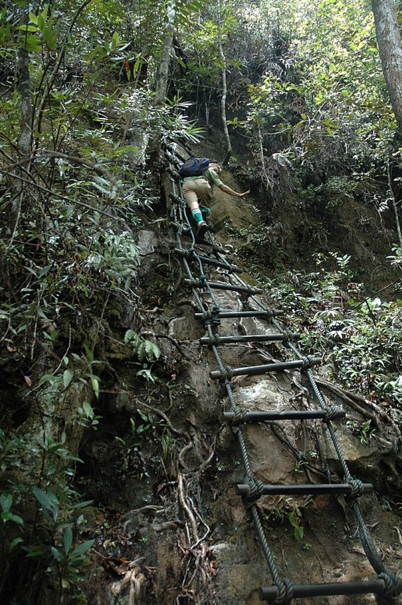 man scaling a rope ladder in the forest