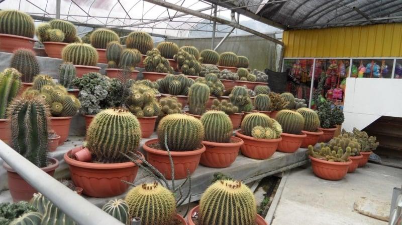cactus centre in cameron highlands
