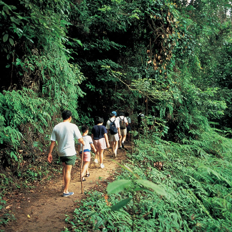 locals hiking the trail at Bukit Timah Nature Reserve