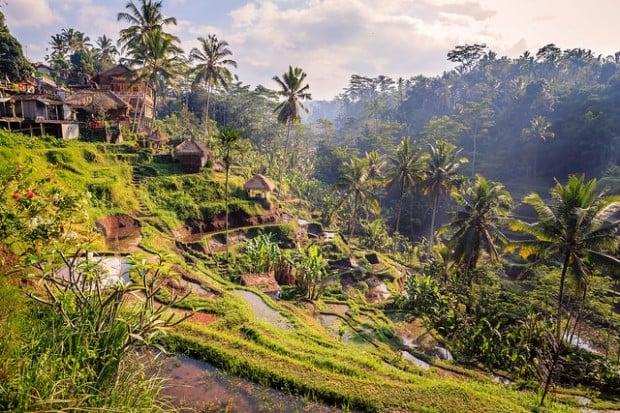 Ubud Ricefield Walk