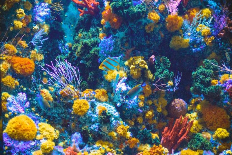 palawan corals