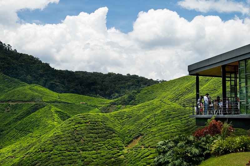 things to do in cameron highlands