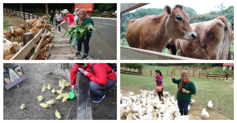 flying cow ranch taiwan