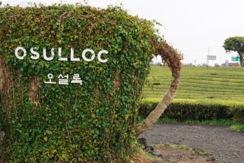 osulloc tea museum jeju island attractions