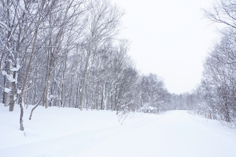 Frost-covered forest White Isle Niseko