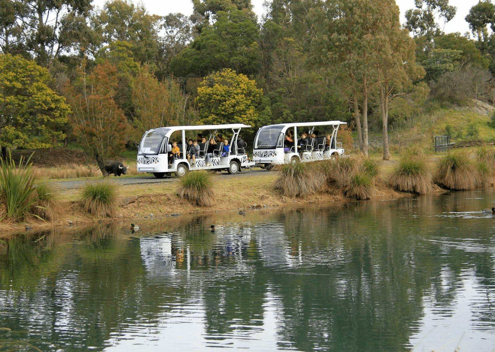 safari tram in orana wildlife park