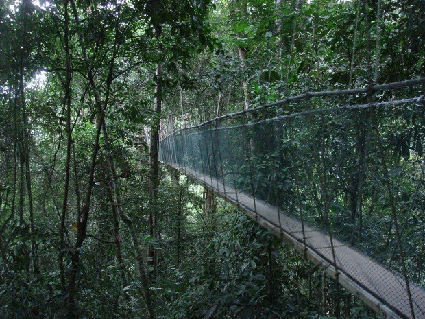 Poring Canopy Walk & Amazing Forest Canopy Walks in Malaysia You Have to Experience