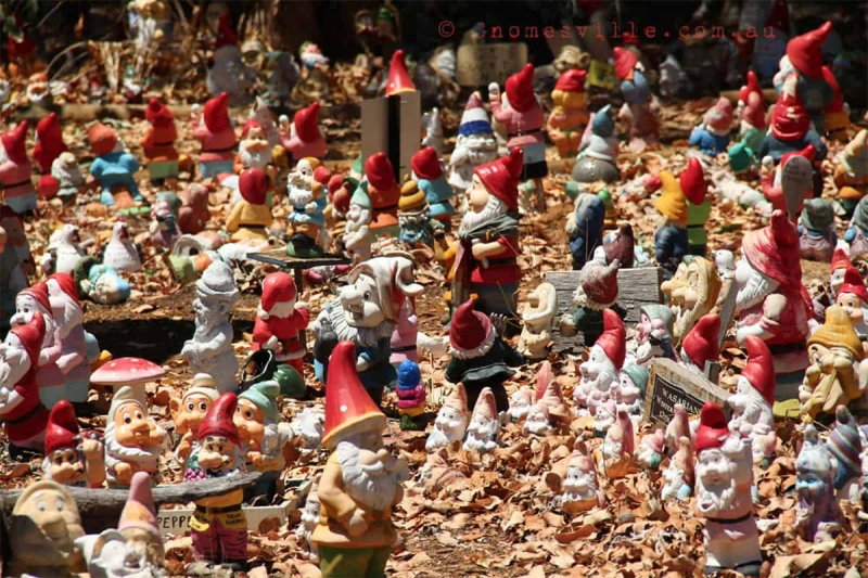 gnomes in gnomesville
