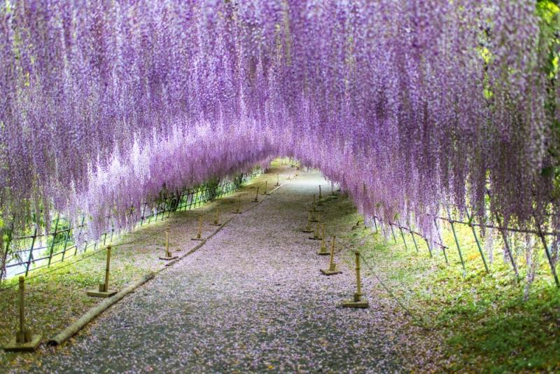 Flower Park Japan: Kawachi Fuji Garden