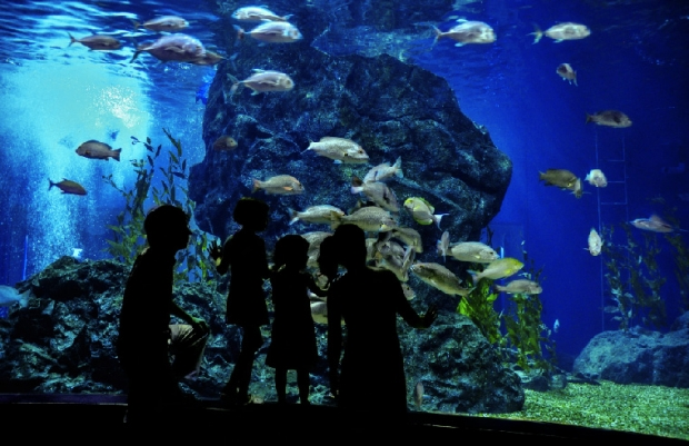 Family KL Aquarium Escapade with Stay at Furama Bukit Bintang