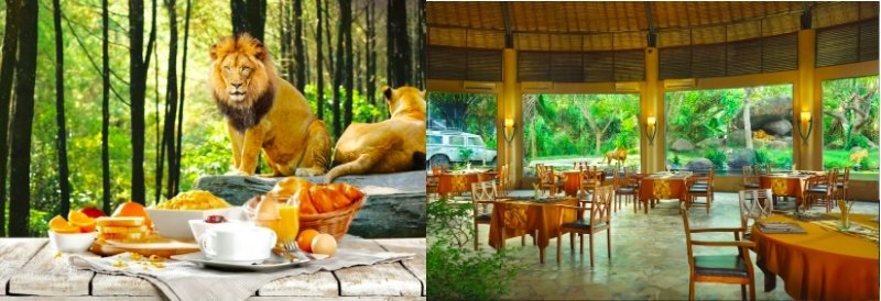 8 Reasons Why Bali Safari & Marine Park Should Be In Your ...