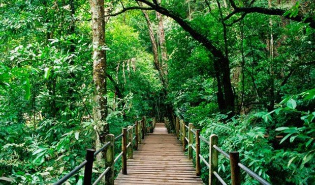 KL Forest Eco Park & Amazing Forest Canopy Walks in Malaysia You Have to Experience