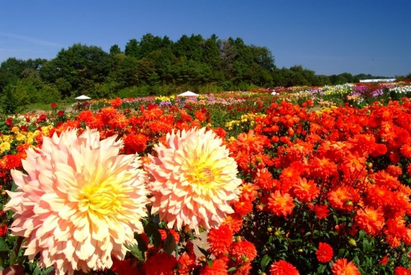 Flower Park Japan: Serakogen Farm