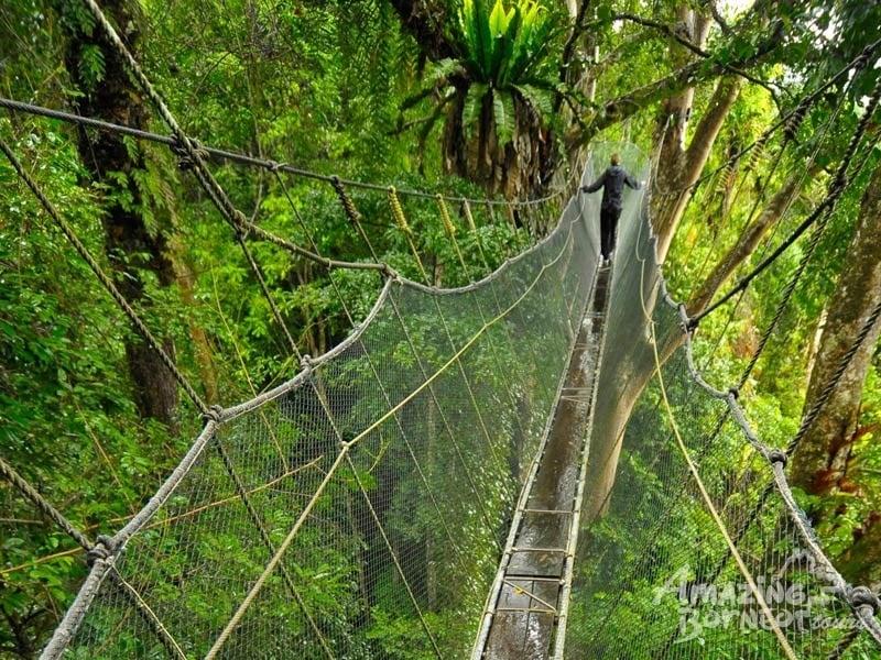 poring canopy treetop walk