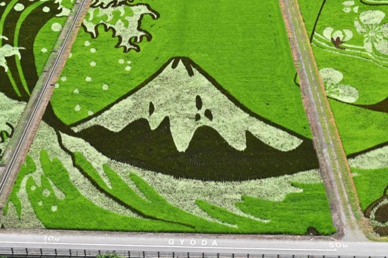 rice paddies gyoda