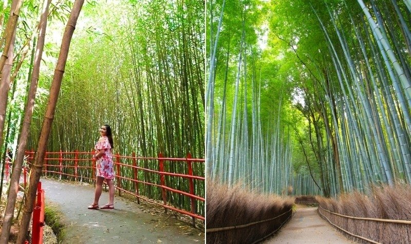 8 Stunning Places in the Philippines That Look Like Japan