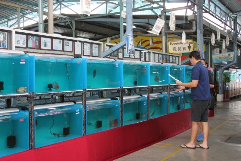 fish farm singapore