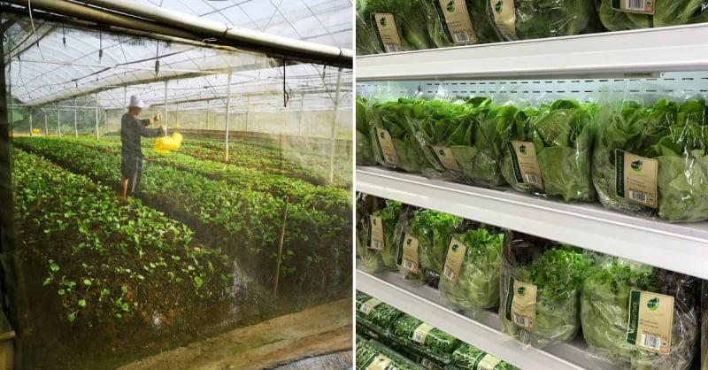 hydroponics farm singapore