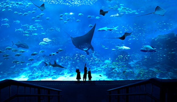 S.E.A. Aquarium One-Day Adult Pass from SGD45 with UOB Card