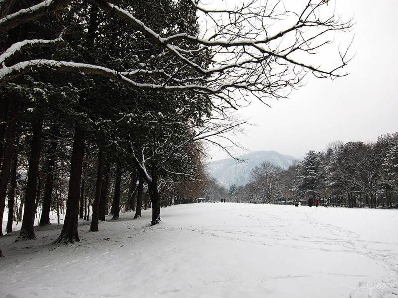 Nami Island - winter