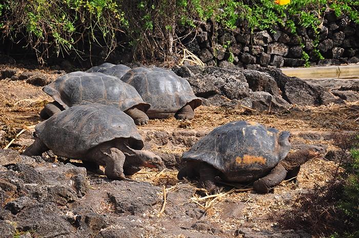 galapagos island animals