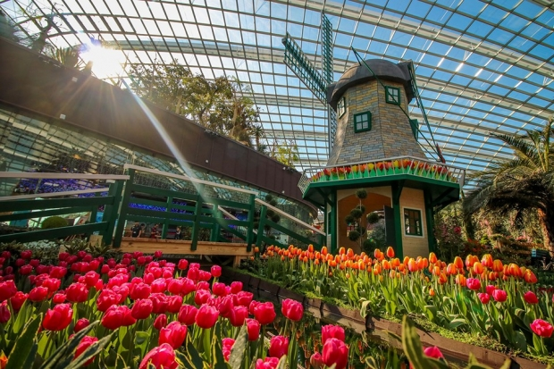 WIN a Trip to Amsterdam with KLM Royal Dutch Airlines and Gardens by the Bay