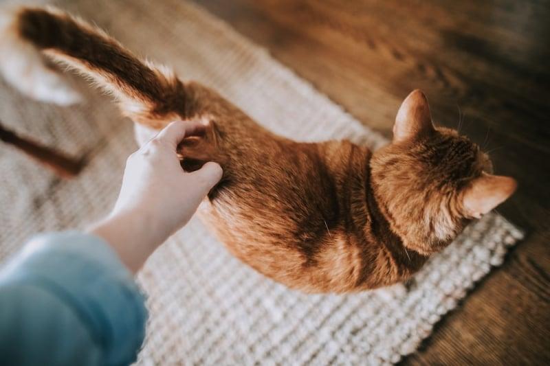 pet adoption singapore