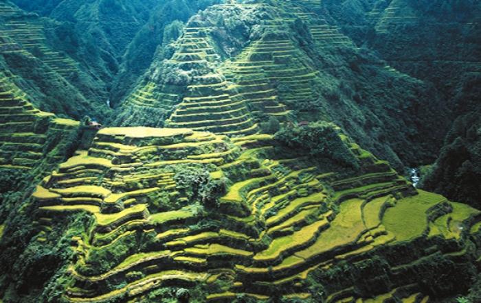 Ruộng bậc thang trên các dãy núi ở tỉnh Ifugao