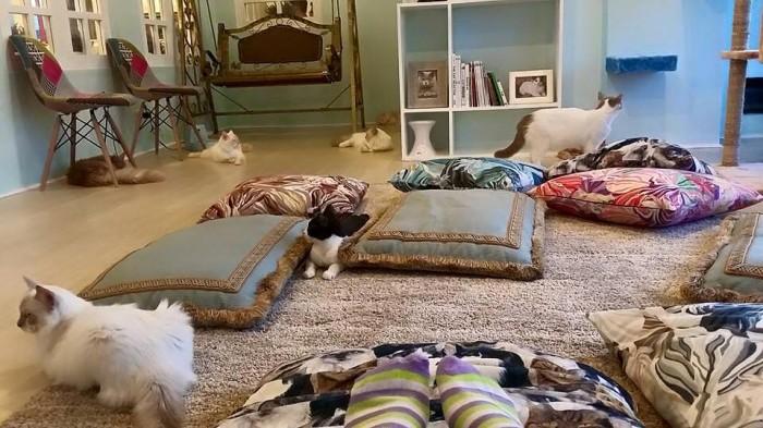 Velvet Friends Cat Cafe Company