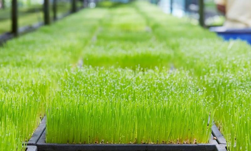 hydroponics farms in singapore