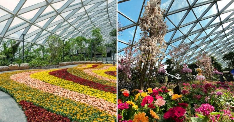 jewel changi canopy park attractions date ideas singapore best deals
