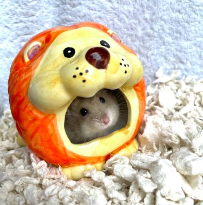 churros the hamster