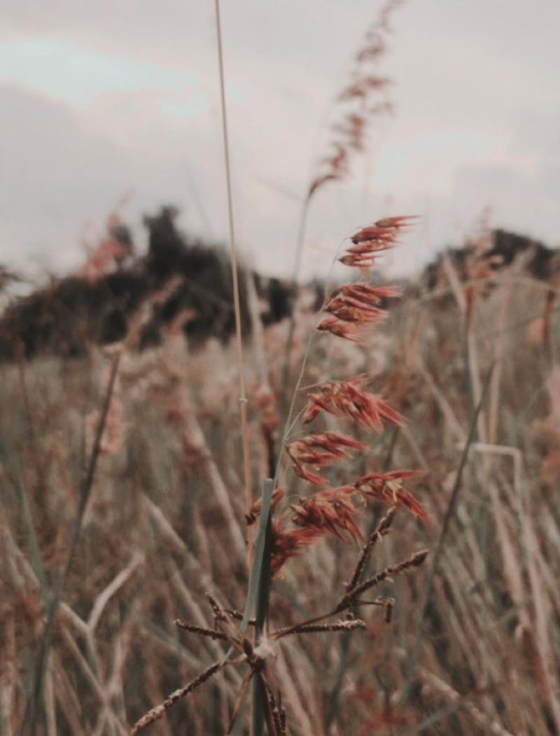 Jurong Lake Gardens singapore grasslands