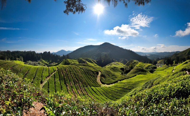 cameron highlands itinerary
