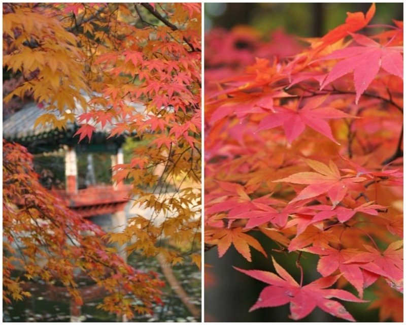 9 Places to Visit in Korea that Look Even More Stunning in Autumn