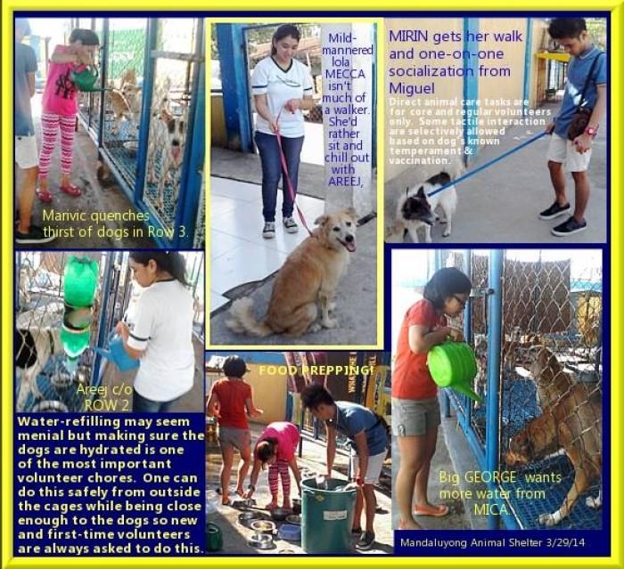 Mandaluyong Animal Shelter