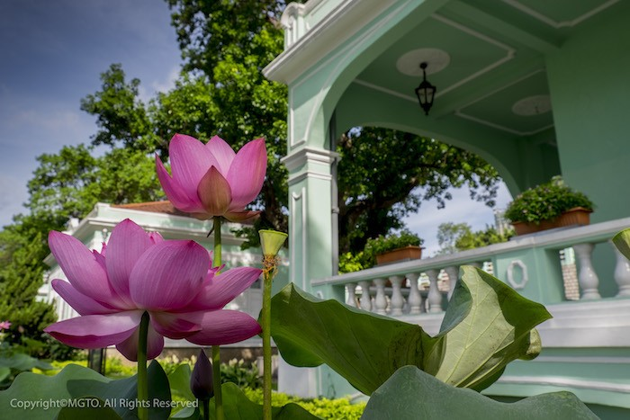 Macao Lotus Flower Festival