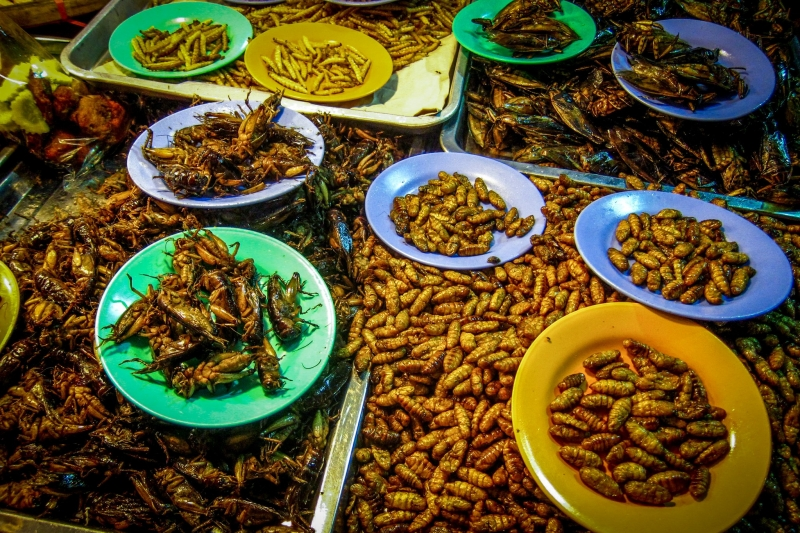 thai street food at the night market
