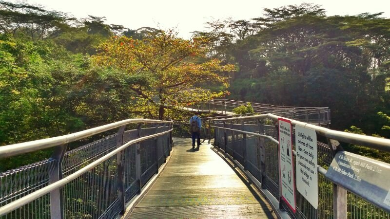Telok Blangah Hill Park best places hike singapore