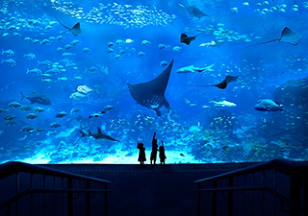 S.E.A Aquarium™ Adult One-Day Ticket at SGD28 with OCBC Cards