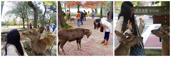 Lịch trình du lịch Nhật Bản