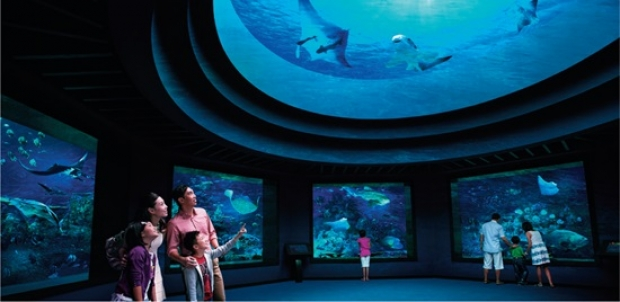 Mastercard® Exclusive: S.E.A. Aquarium Adult One-Day Ticket + Free SGD5 Meal Voucher and Turtle Plush Keychain at SGD36