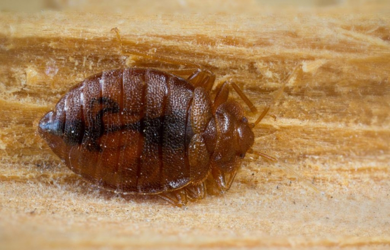 Bed Bugs In Floorboards Home Plan