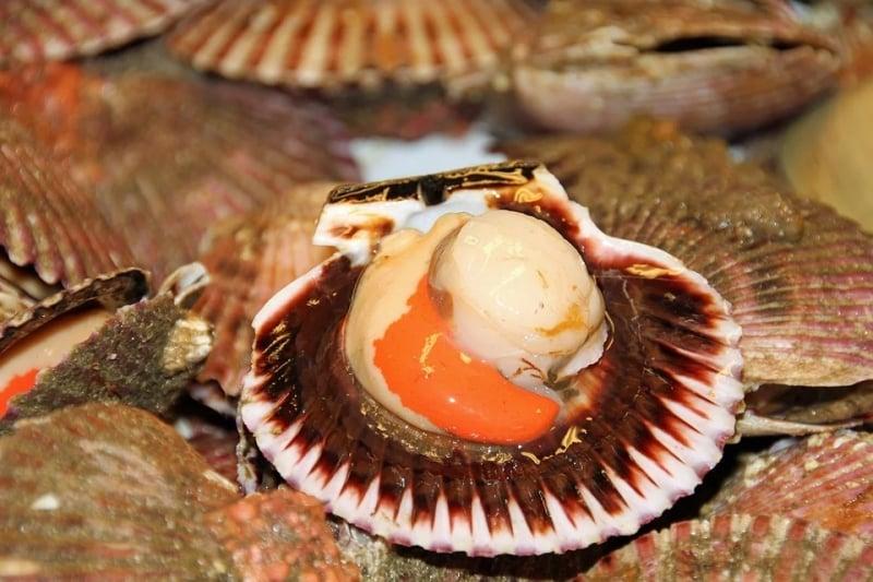 scallops at antonia beach